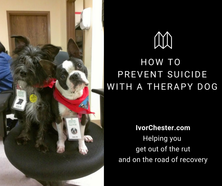 Therapy dogs on chair at clinic | Help prevent suicide
